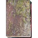 Portola Redwoods Camping